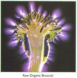 raworganicbrocolli